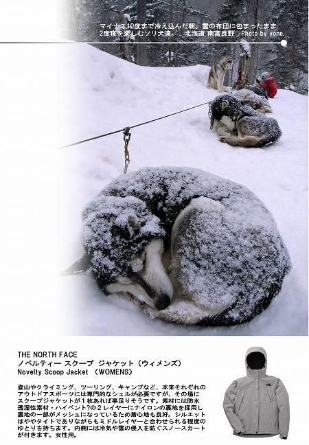 W450-カタログ風:ソリ犬の適温.jpg